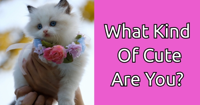 What Kind Of Cute Are You?
