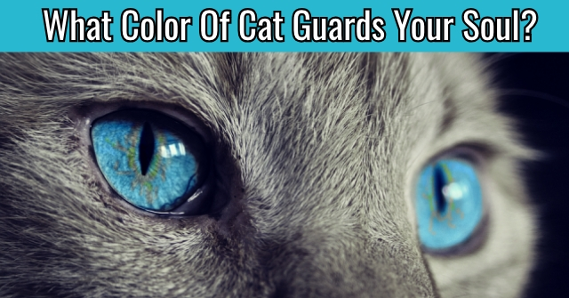 What Color Of Cat Guards Your Soul?