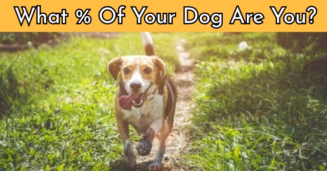 What % Of Your Dog Are You?