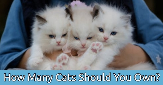 How Many Cats Should You Own?