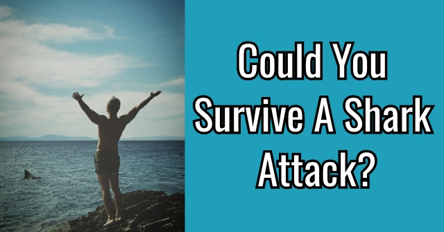 Could you Survive A Shark Attack?